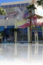 Flamingo Las Vegas and Margaritaville